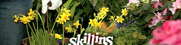 skillins_2060_2160885